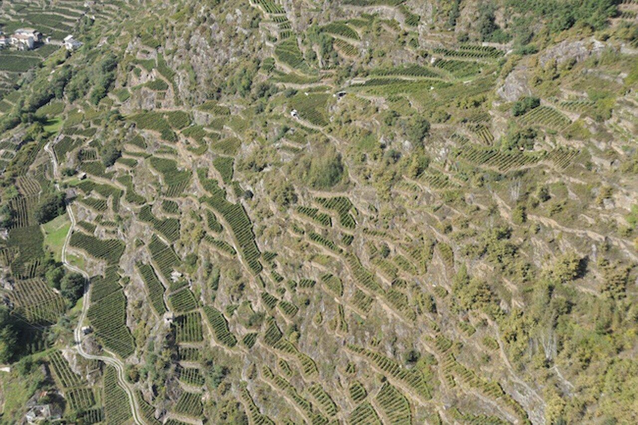 Piergiacomo Merizzi_Triasso (archivio III incontro mondiale sui paesaggi terrazzati)
